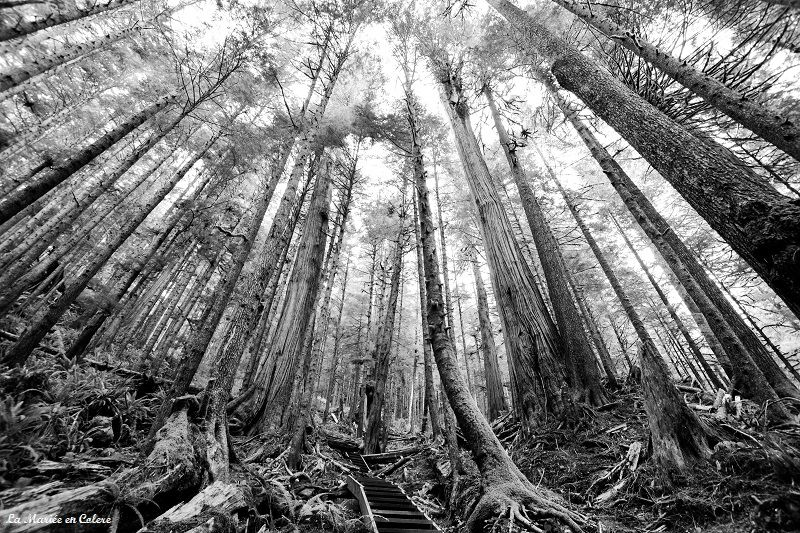 foret avatar grove vancouver island