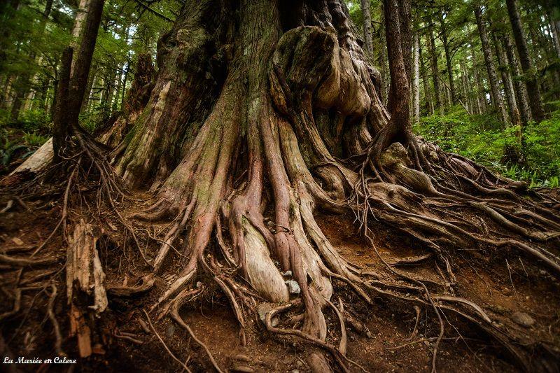 forêt-vancouver-island